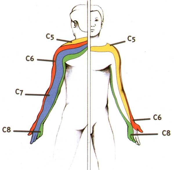 zone douloureuse canal déférent