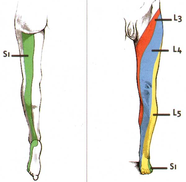 Sciatique cruralgie for Douleur genou interieur